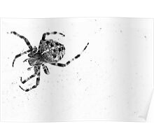 Spider No More Colour Poster