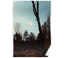 Cloud and a Tree Poster