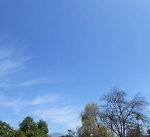 Sky and Trees by Piero