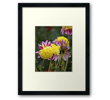 Flowers at the Eden project Framed Print