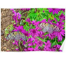 2 Tree Nymph Butterflies Poster
