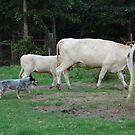 Abby Working The Cattle by WildestArt