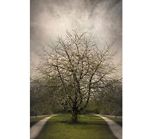Parallel Paths Photographic Print