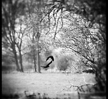 Flighty by Citizen