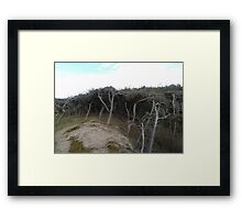 Dune Forest Framed Print