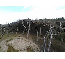 Dune Forest Photographic Print
