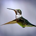 Hummingbird by venny