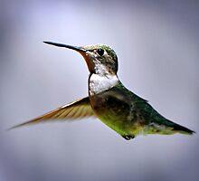 Hummingbird by Savannah Gibbs