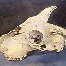 Sheep skull study by Jedika
