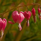 Bleeding Heart Flowers by JMChown