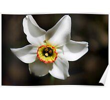 Narcissus I Poster