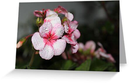 Rain on the Geraniums by aprilann