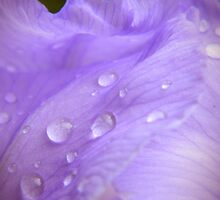 Dew Drops by K L Roberts