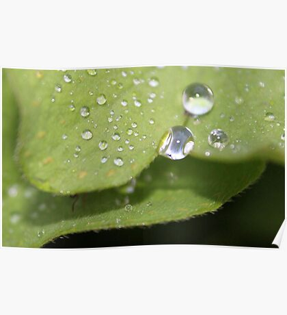 Raindrops Keep Falling On My Leaves Poster