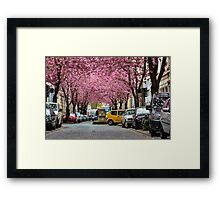 Rows of cherry blossom trees in full bloom on Heerstrasse (cherry blossom avenue) in Bonn in Germany Framed Print
