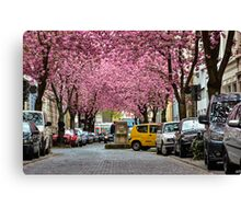 Rows of cherry blossom trees in full bloom on Heerstrasse (cherry blossom avenue) in Bonn in Germany Canvas Print