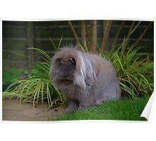 Bunny Rabbit's Garden Poster