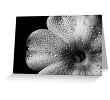 Phlox 1 B&W Greeting Card