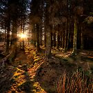 Last Light in The Forest by hebrideslight