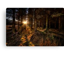 Last Light in The Forest Canvas Print