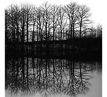 The Grove Photographic Print