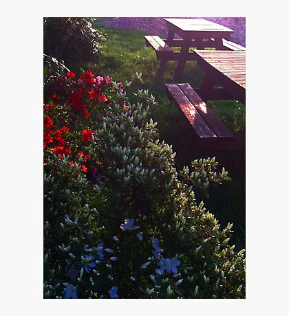 Bursting Flowers by Wooden Benches Photographic Print