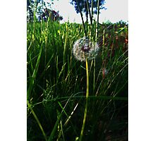 The Dandelion's Wish of Perhaps Photographic Print