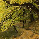 Autumn in Kyneton Victoria Australia by PhotoJoJo