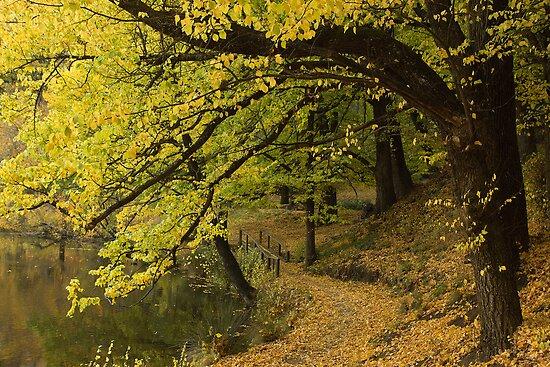 Buninyong Australia  city photo : PhotoJoJo › Portfolio › Autumn in Kyneton Victoria Australia