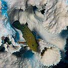 Bluespotted Grouper, Kimbe Bay, Papua New Guinea by Erik Schlogl