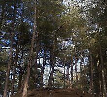 Woods by damianaashe