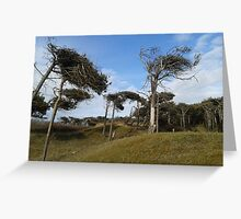 Dune Trees in the Wind Greeting Card