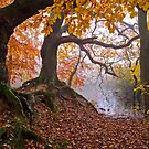 Gnarly Roots by Keld Bach