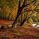 Fall has Fallen by Keld Bach