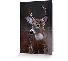 Deer boy - White-tailed Deer Greeting Card