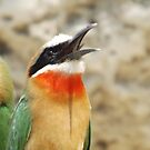 White fronted Bee-eater by Pauline Adair
