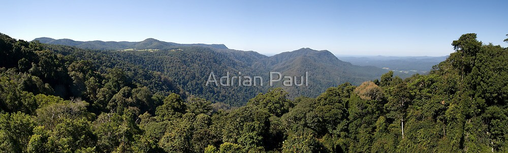 Dorrigo National Park Panorama by Adrian Paul