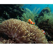 Nemo Photographic Print