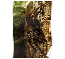 Arachnid in Darkness Poster