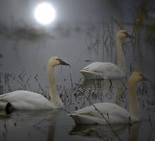 The Swan Song by Charles & Patricia   Harkins ~ Picture Oregon