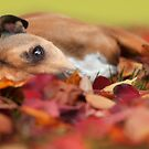 Shades of Autumn by Kerri Madison