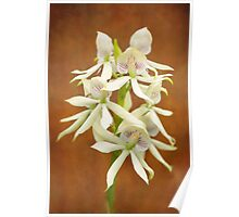 Flower - Orchid - A gift for you  Poster