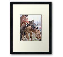 Equine Fluffy Framed Print