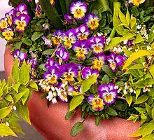 Flower - Pansy - Purple Posies  by Mike  Savad