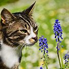 Kitty Enjoying The Muscari by Susie Peek