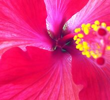 Tropical Beauty by Buckeyefiveo