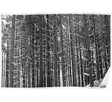 Wintry forest Poster