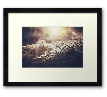 Hint of winter Framed Print