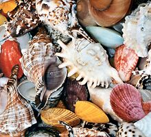 Colorful Seashells by TilenHrovatic