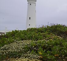 Lighthouse Flowers by Eldon Mason
